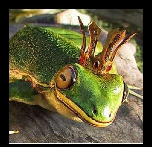 Czym różni się żaba od faceta?